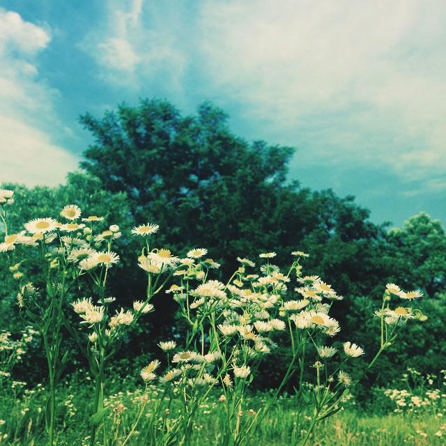 夏だな〜#akita #秋田 #odate #大館 #citysitelink