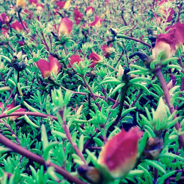 最近気になる花なんて花だろう?#akita #秋田 #odate #大館 #citysitelink #花 #花の名前 #flower