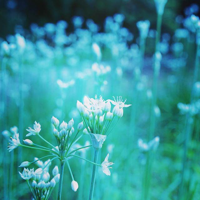 秋の風に揺れてたなんの花?#なんの花 #花の名前#akita #秋田 #odate #大館 #citysitelink