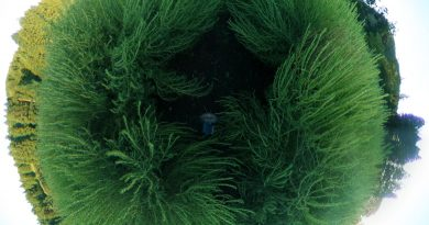 広大なエメラルドグリーンのとんぶり畑