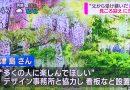 5/30のNHK「おはよう秋田」で「十ノ瀬 藤の郷」がテレビで紹介いただきました