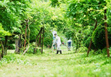 十ノ瀬藤の郷 草刈りピクニック 写真